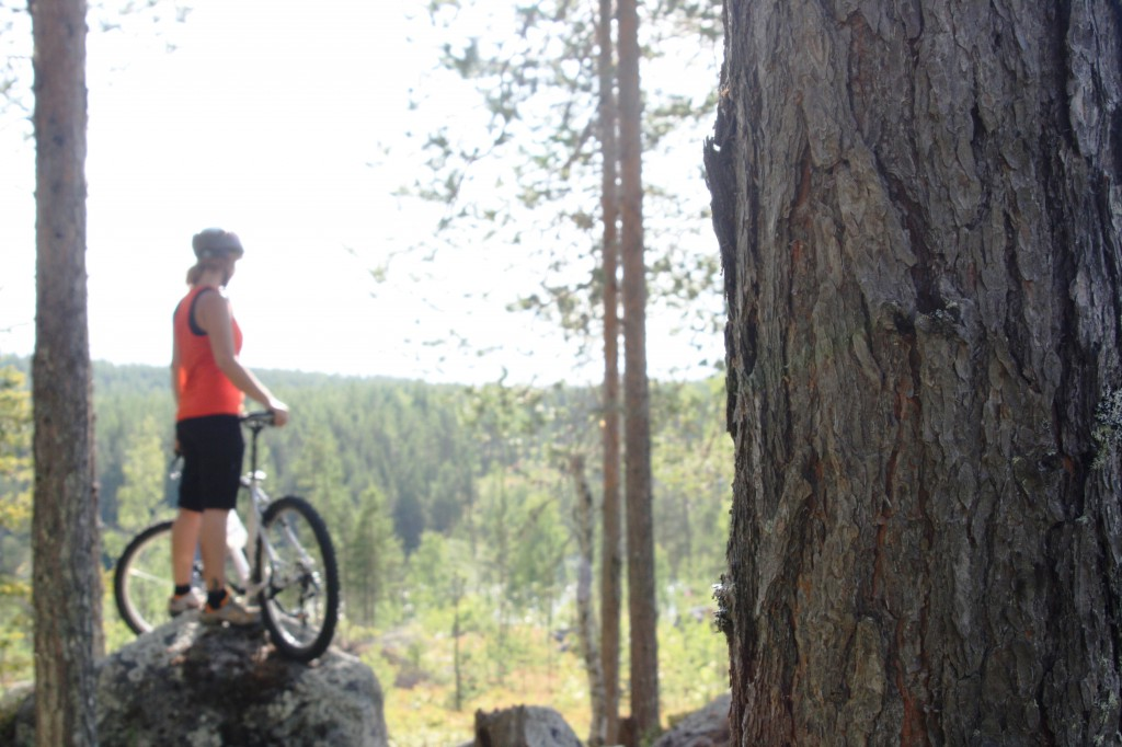 Swedish Lapland forest view MTB